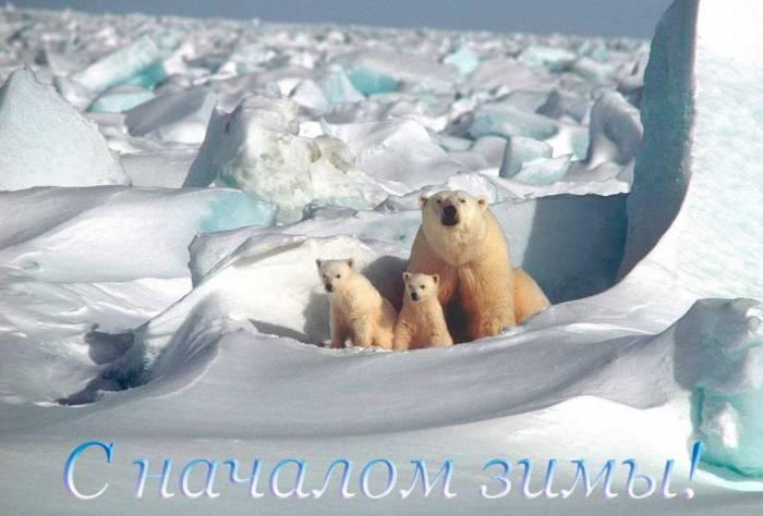 белые медведи поздравляют с первым зимним днем