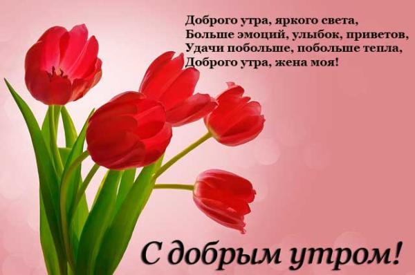 букет тюльпанов и красивое пожелание доброго утра