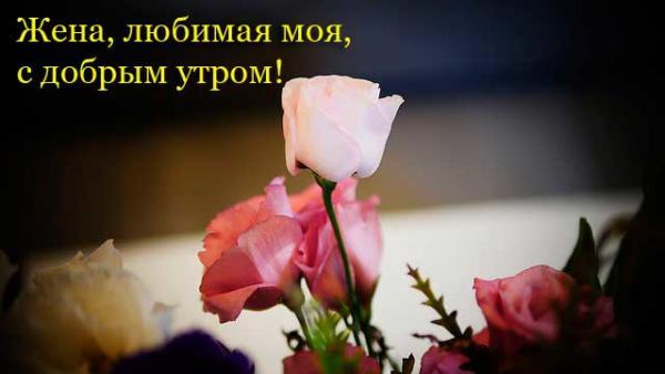 красивые розы и пожелание доброго утра