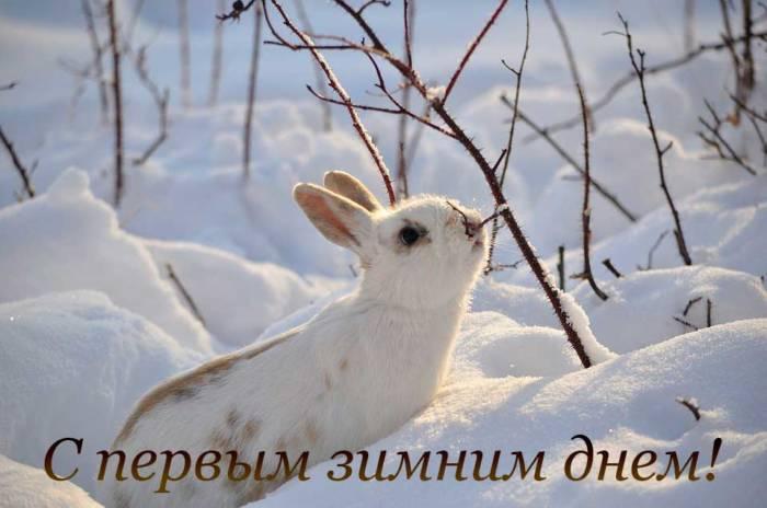кролик на первом снегу