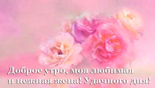 нежные цветы для жены