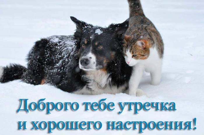 пес и кот желают хорошего настроения