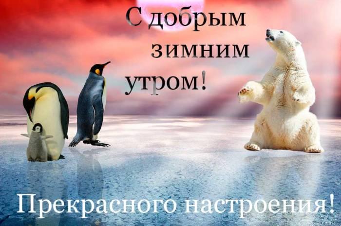 пингвины и белый медведь желают доброго утра