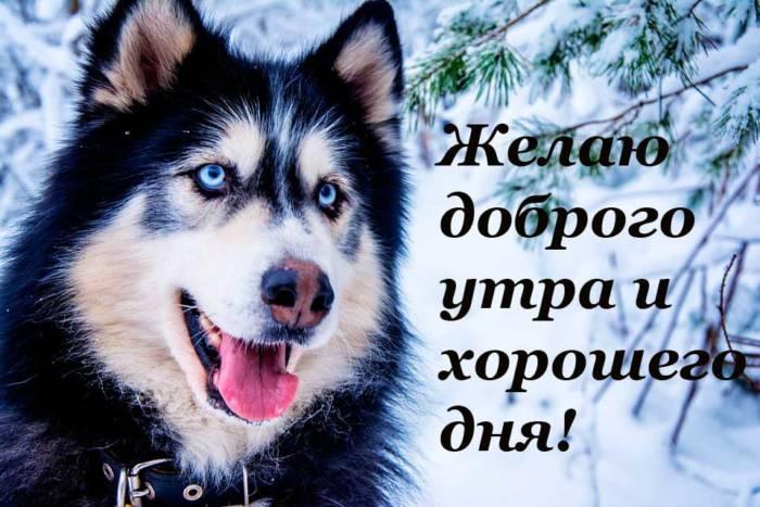 прикольный пес с пожеланием