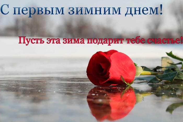 роза на льду в первый зимний день