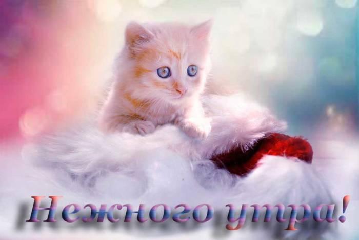 котенок и пожелание нежного утра