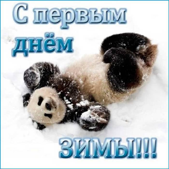 панда в первый зимний день