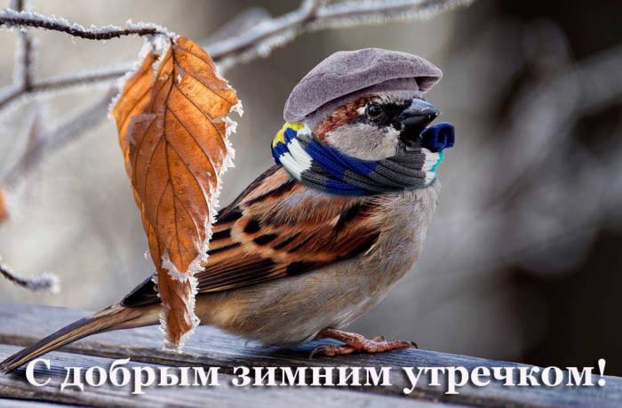 прикольная птичка