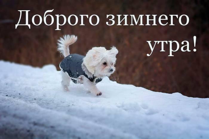 смешная собака на прогулке