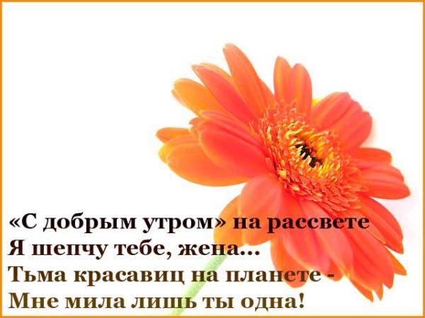 цветок и пожелание доброго утра