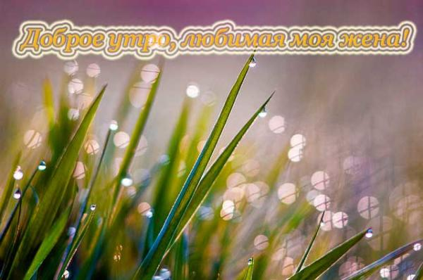 утренняя роса на траве и пожелание