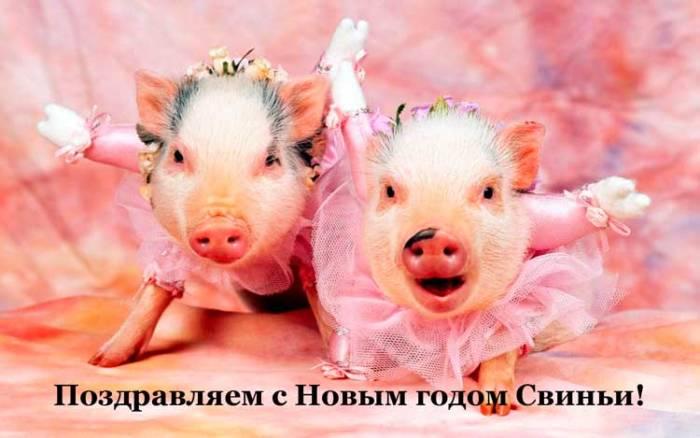 смешные свинки и поздравление с Новым годом 2019