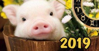 новый год 2019 Желтой Свиньи