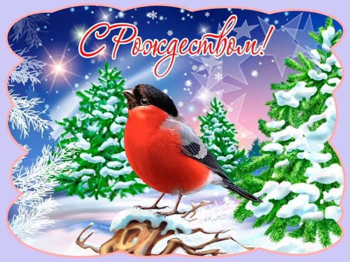 снегирь и поздравление с Рождеством